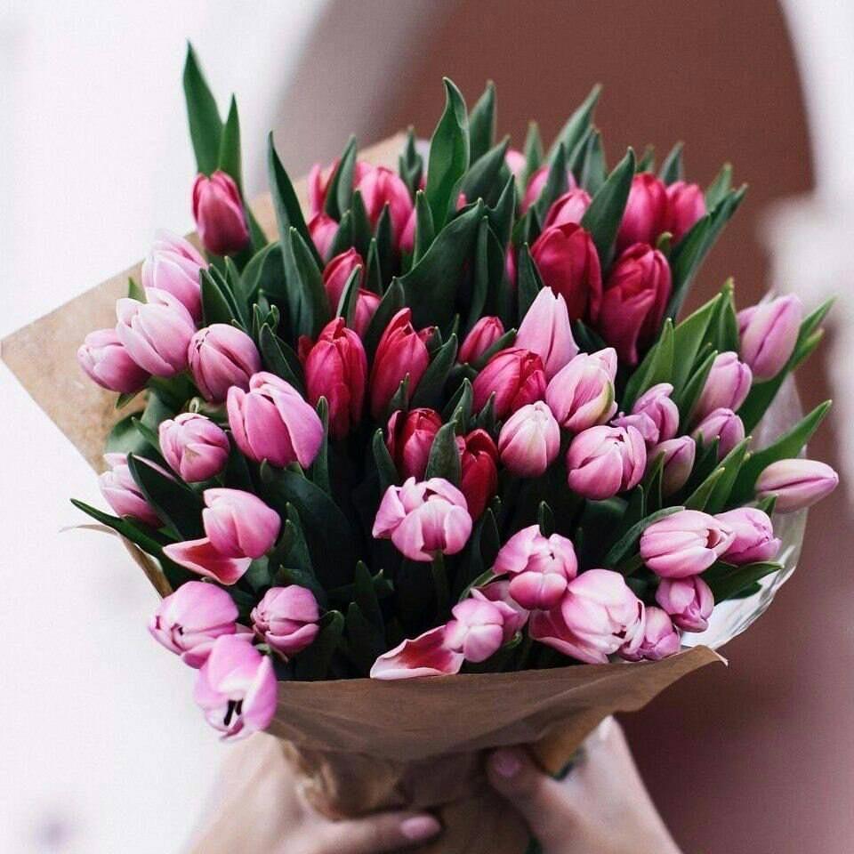 hoa tulip tặng người yêu đẹp nhất