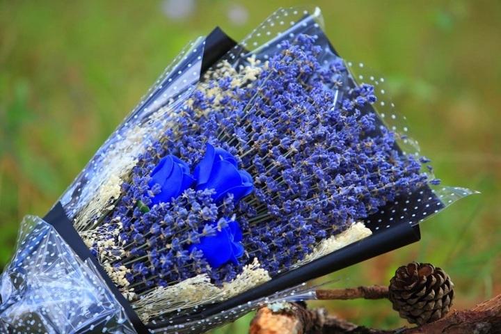 hoa lavender đẹp 11