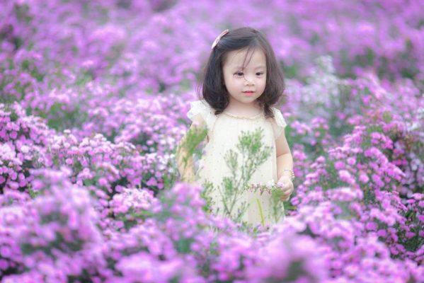 hoa thạch thảo đẹp nhất