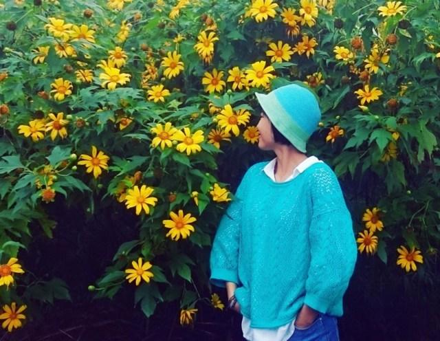 Sự tích về loài hoa dã quỳ bạn có biết 4