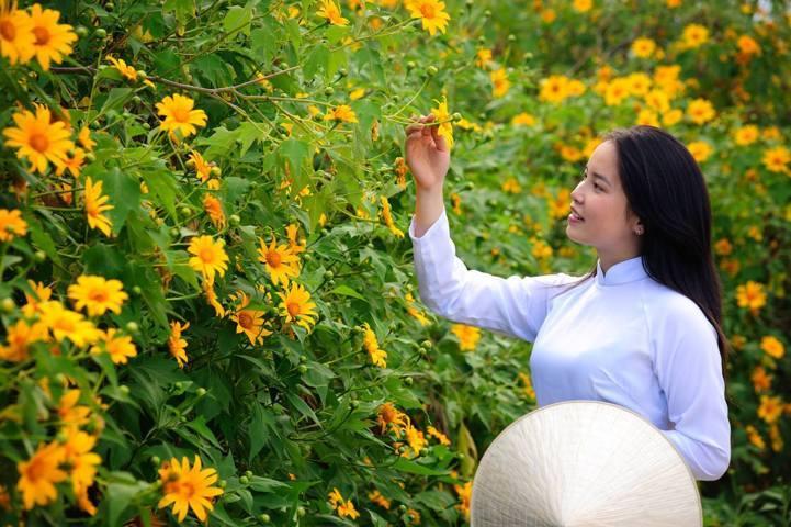 Sự tích về loài hoa dã quỳ bạn có biết 1
