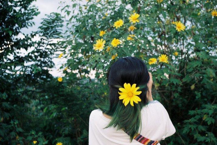 Sự tích về loài hoa dã quỳ bạn có biết 8