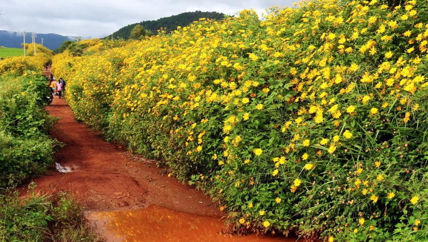 sự tích về loài hoa dã quỳ 1-7