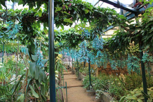 hoa móng cọp xanh 2019