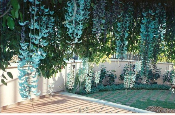 hoa móng cọp xanh 1