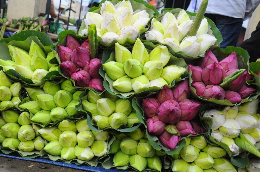 nơi bán hoa sen ở sài gòn 1