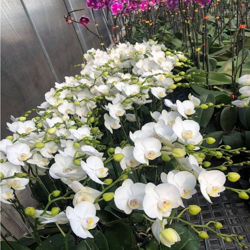 Cửa hàng hoa tươi lâm đồng