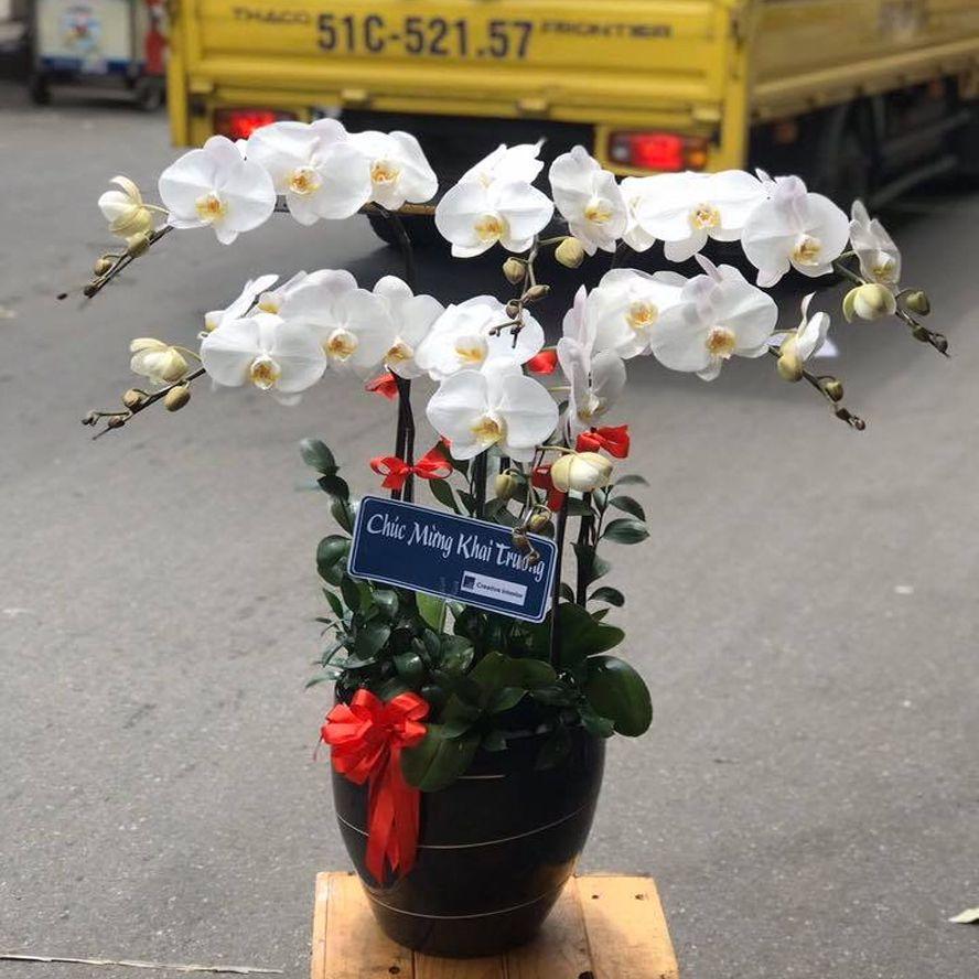 cửa hàng hoa tuyên quang