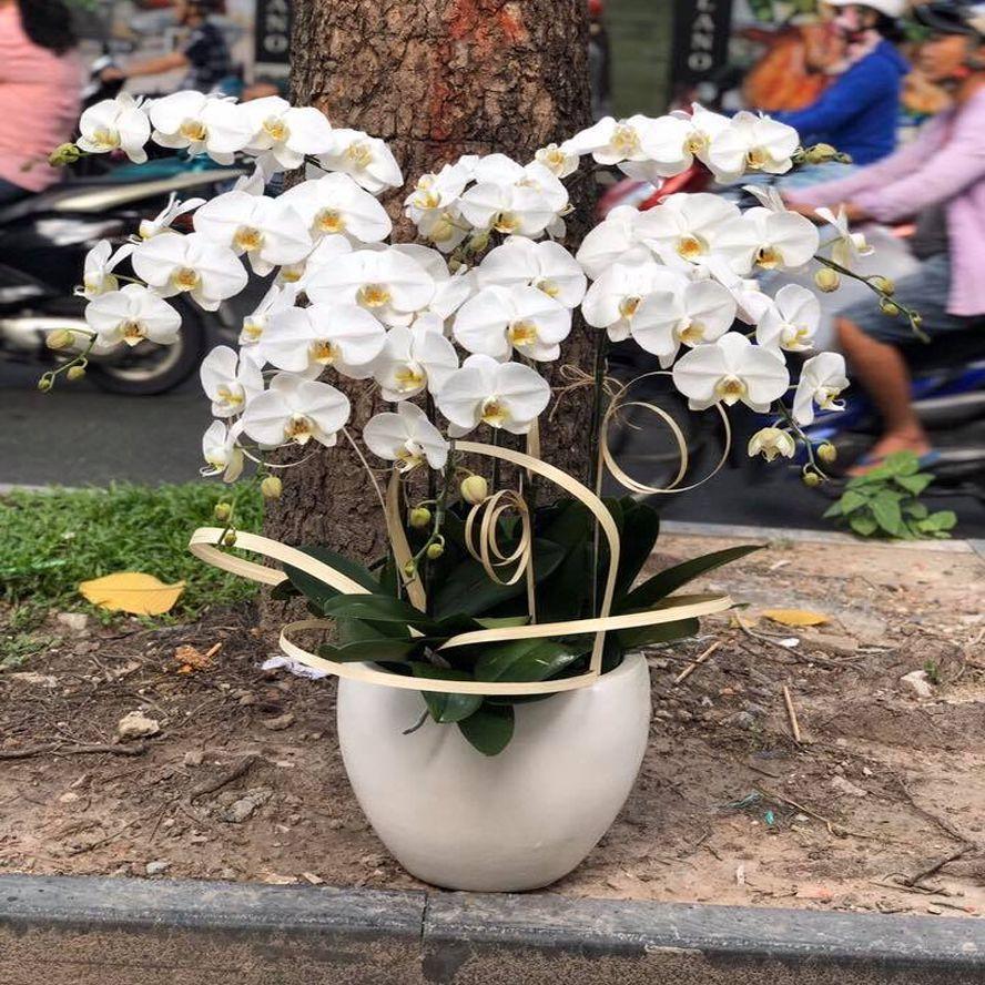 dịch vụ hoa tươi tận nhà tại tuyên quang