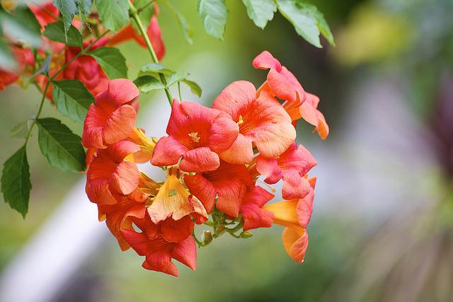 hoa đăng tiêu đẹp 2