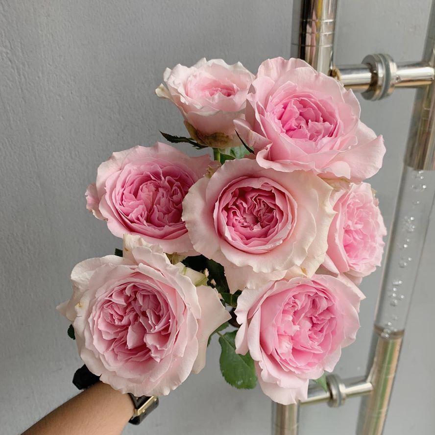 hoa hồng tại quận ba đình