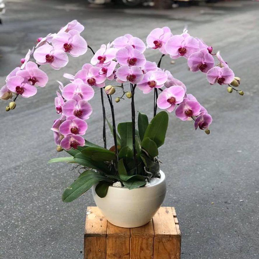 shop hoa tuyên quang