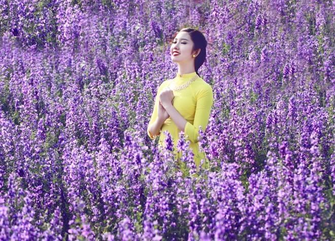 cánh đồng hoa violet 4