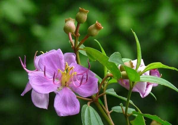 cây hoa mua đẹp nhất 1