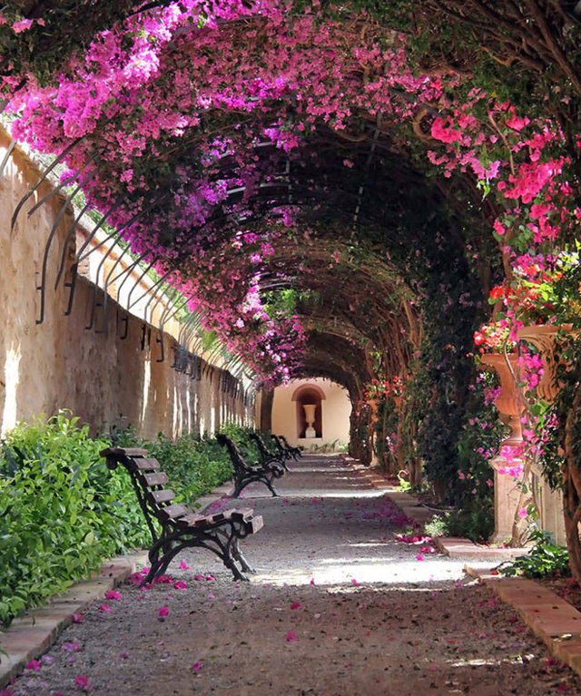 cổng cây hoa giấy 3