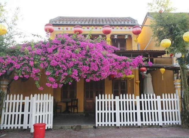 cổng cây hoa giấy 6