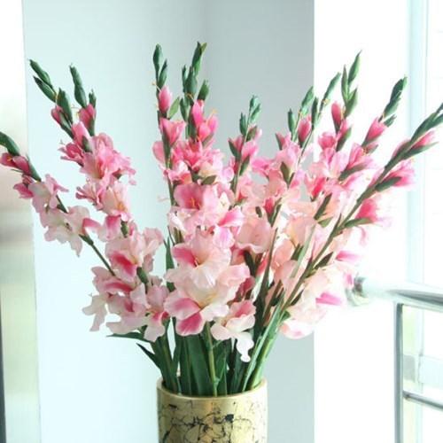 hoa lay ơn hồng đẹp nhất 1