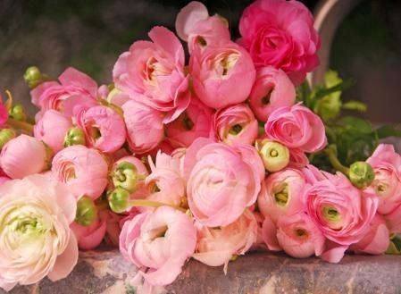 hoa mao lương hồng - đỏ 7
