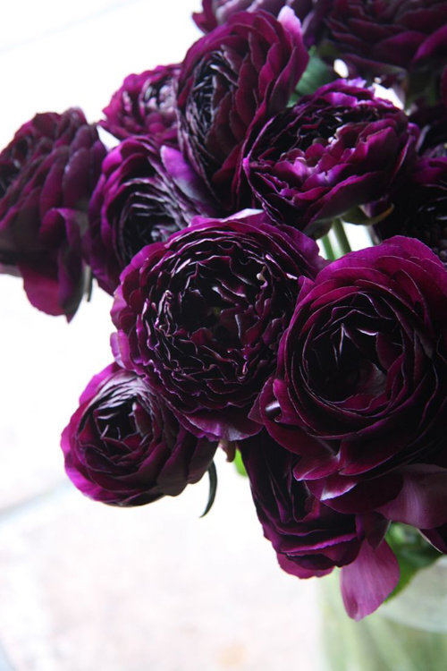 hoa mao lương màu tím đẹp nhất 1