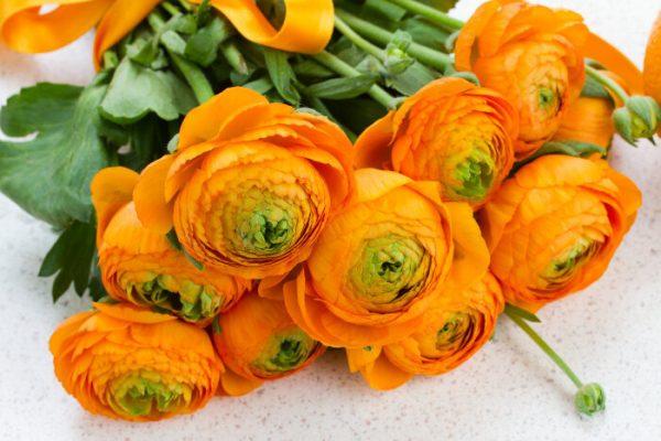 hoa mao lương màu vàng - cam 1