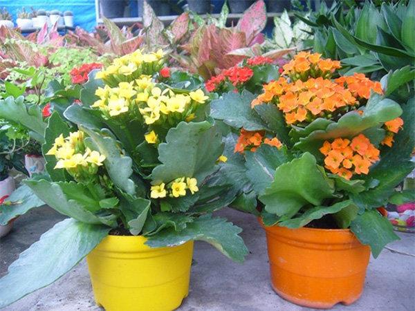 hoa sống đời đẹp nhất 2