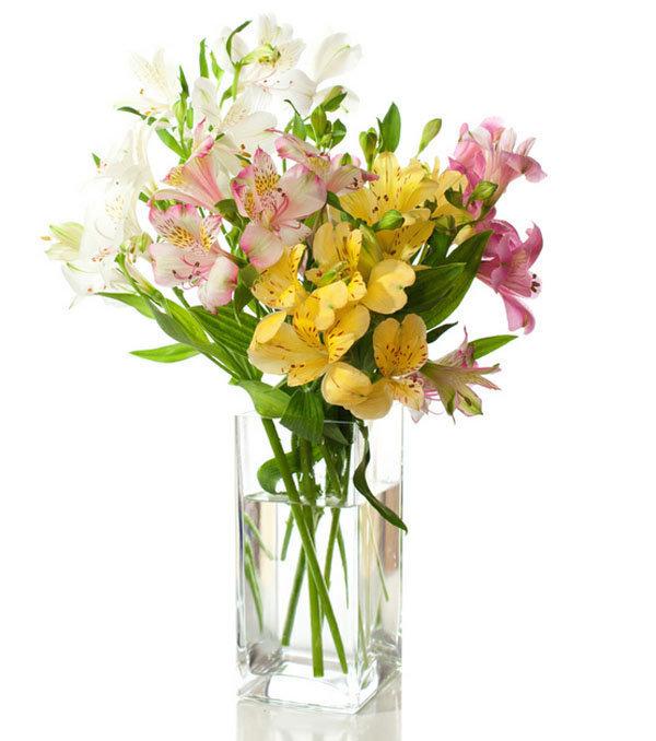 hoa thủy tiên đẹp nhất 2