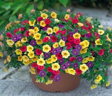 hoa triệu chuông đẹp nhất 1