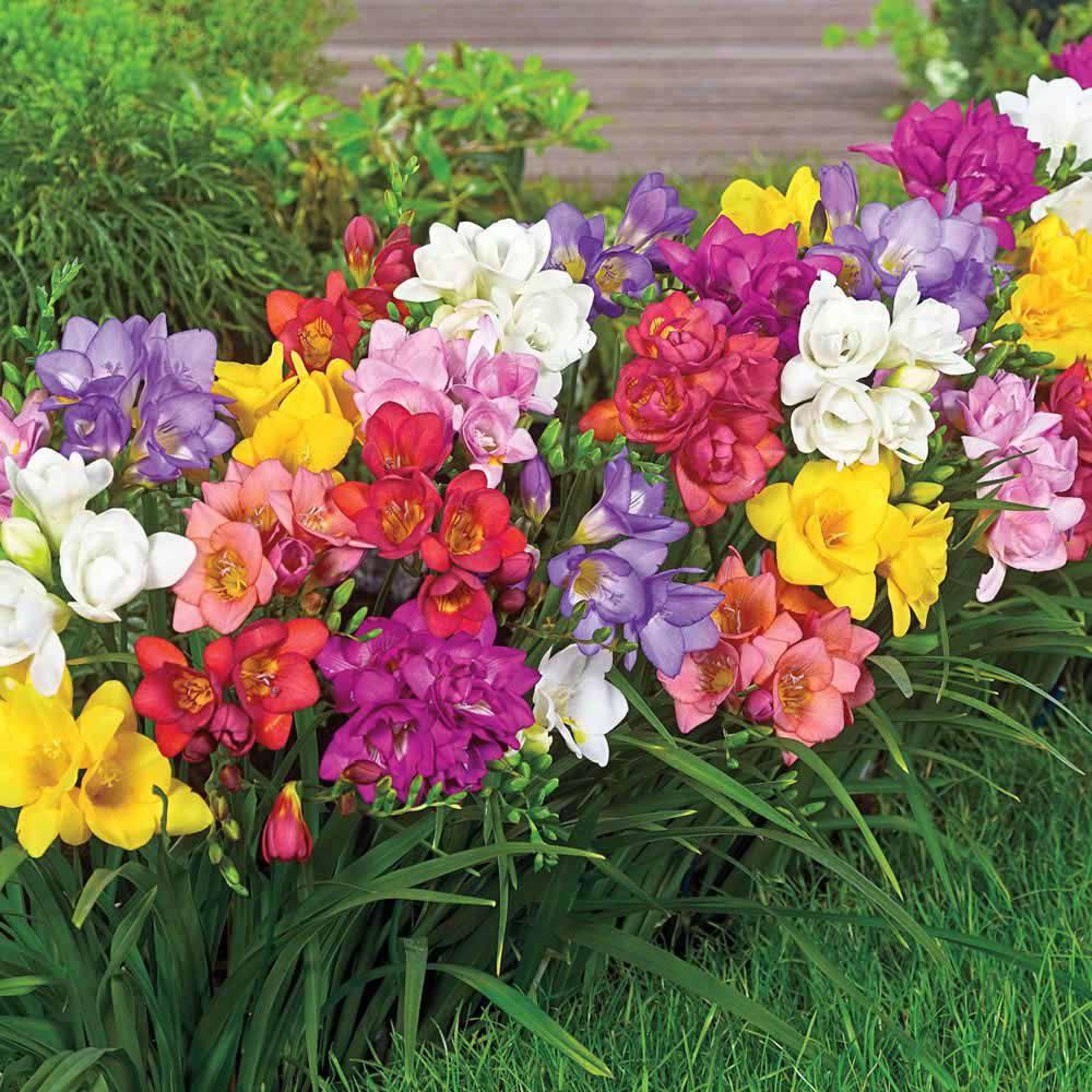 cách chăm sóc hoa lan nam phi