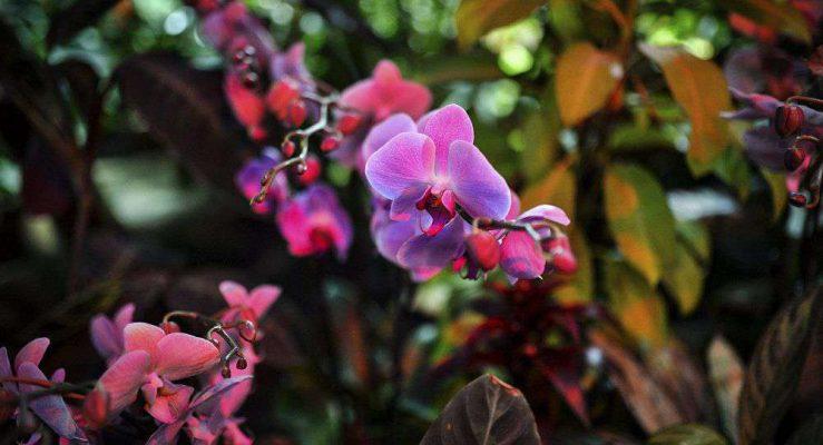 các loài hoa quý ở việt nam