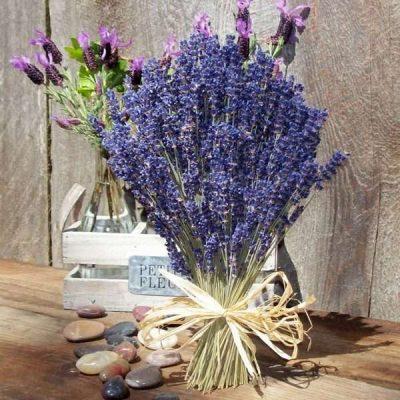 Các loại hoa màu tím việt nam - hoa oải hương tím
