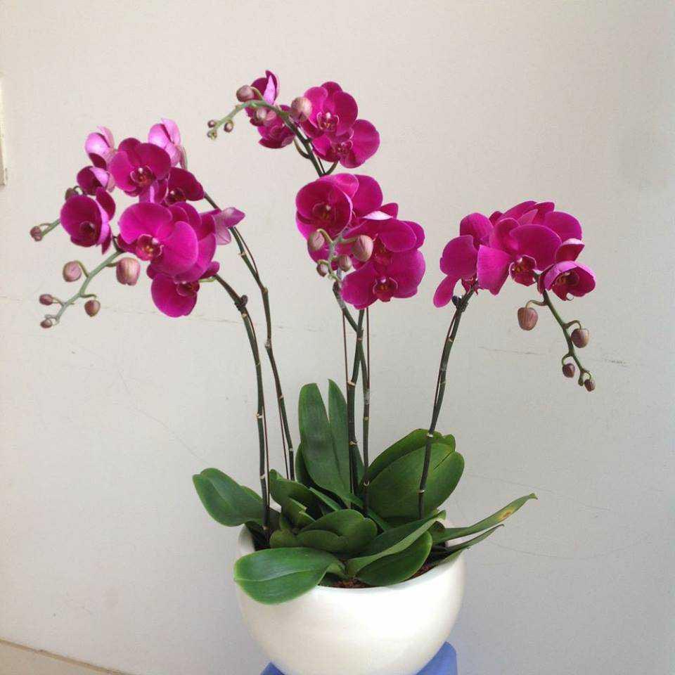 dịch vụ hoa tươi huyện hóc môn 2019