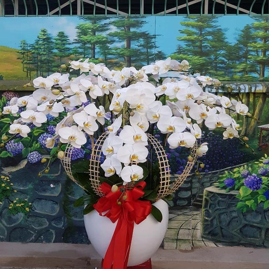 hoa lan hồ điệp giá rẻ đẹp tại quận 4 tphcm