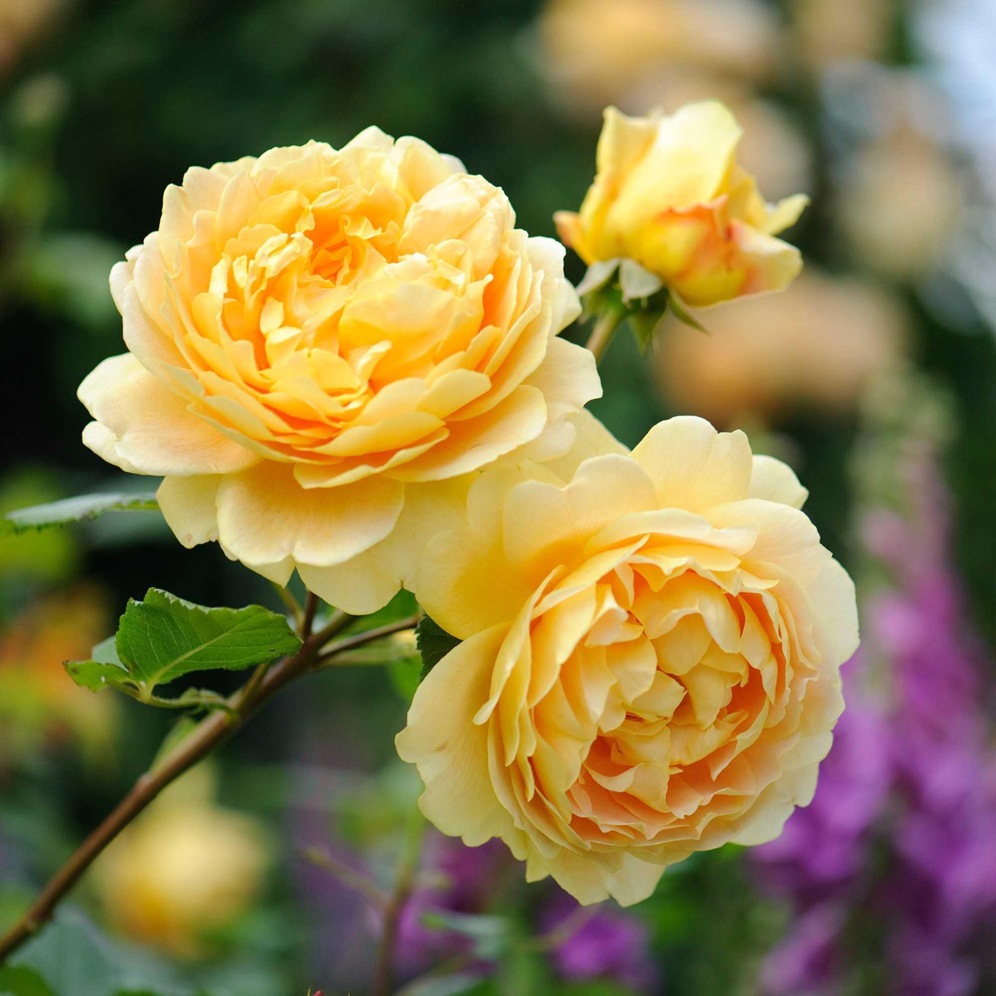 hoa tượng trưng cho tình bạn 2