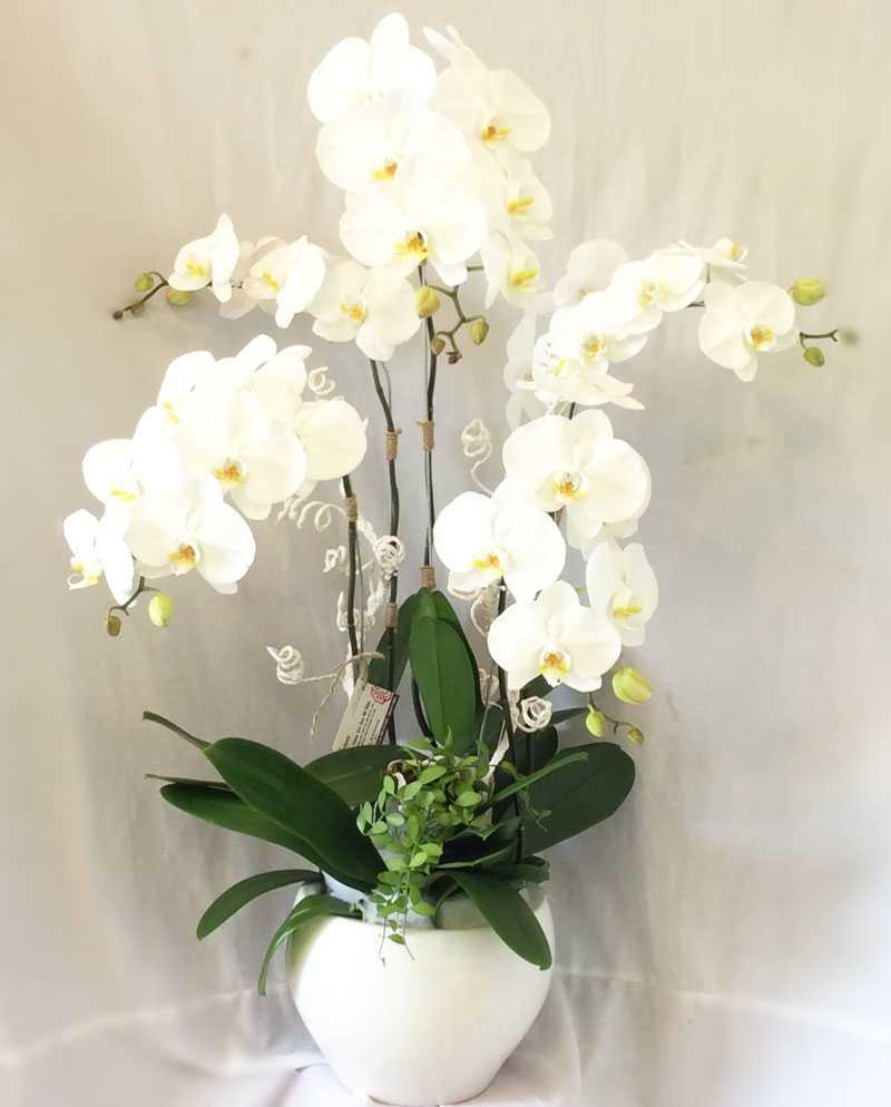 lẵng hoa lan đẹp nhất 11