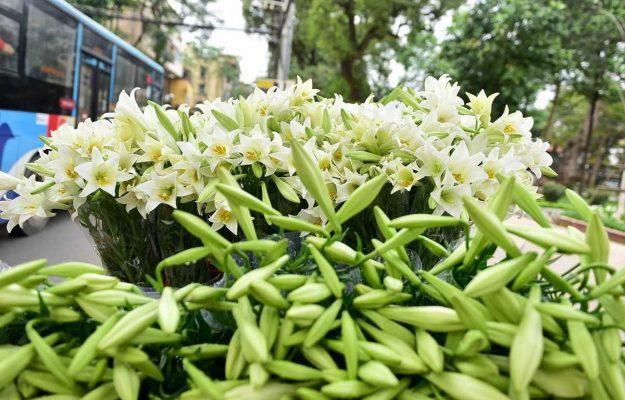 những loài hoa mang ý nghĩa buồn 1