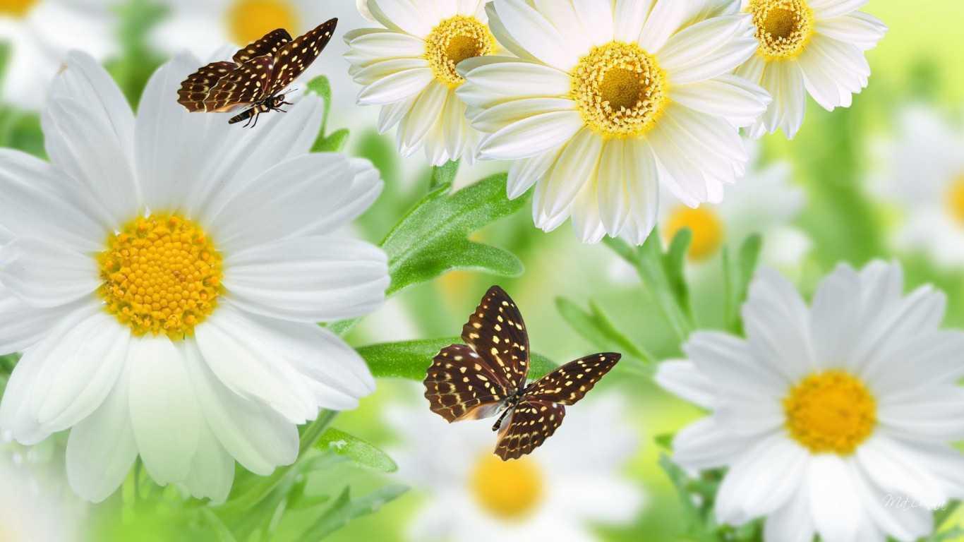 những loài hoa mang ý nghĩa buồn