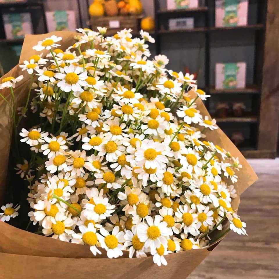 Hoa cúc mừng thọ