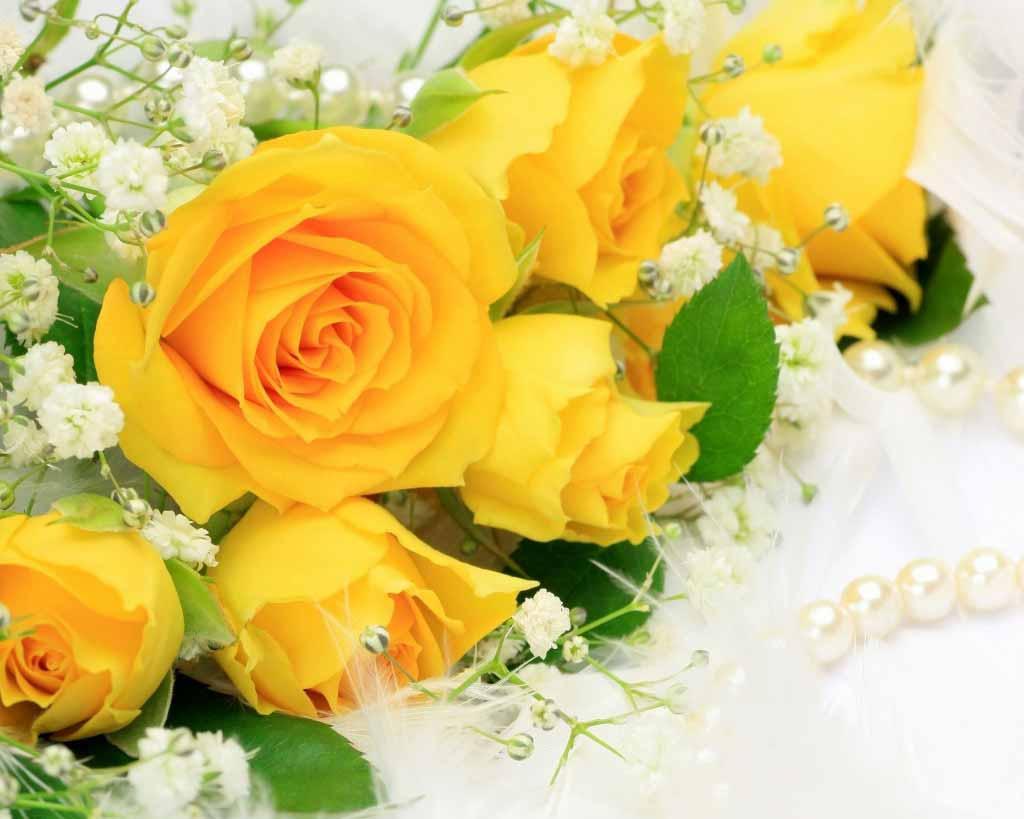 Hoa hồng vàng mùa thu