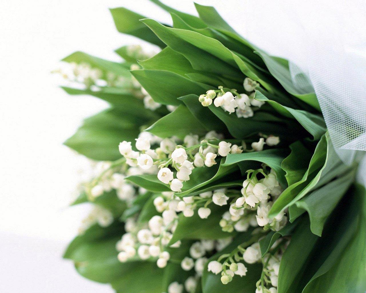 Hoa huệ chuông kỷ niệm ngày cưới