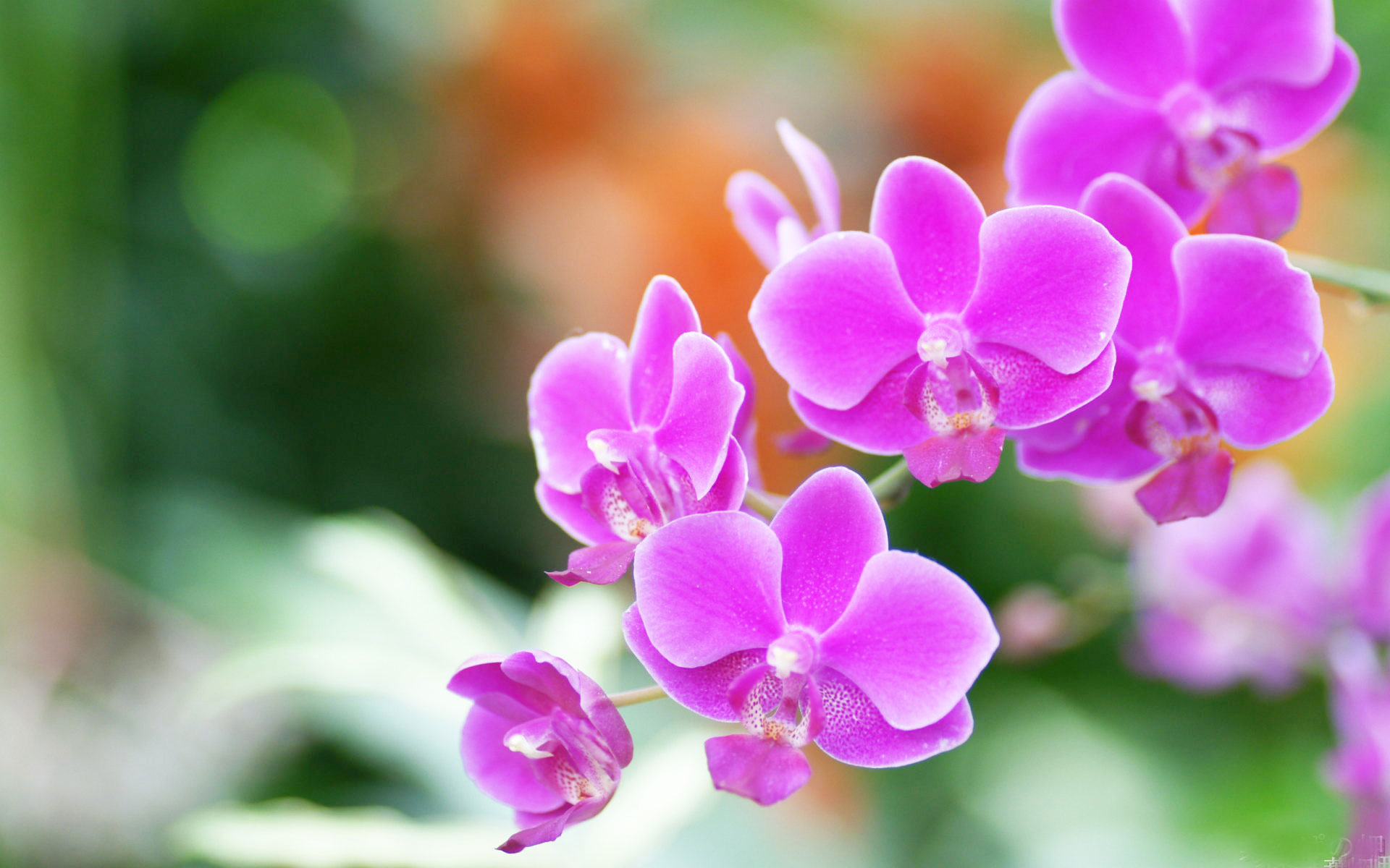Hoa lan mùa hạ