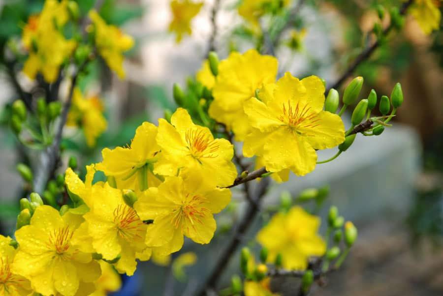Hoa tượng trưng cho 4 mùa