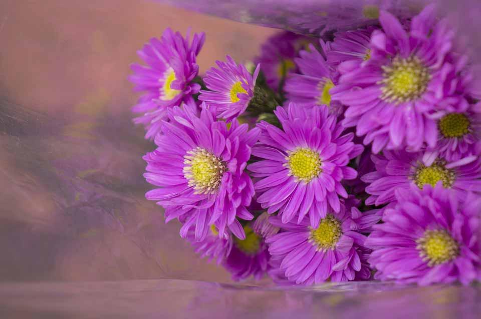 Hoa thạch thảo mùa thu