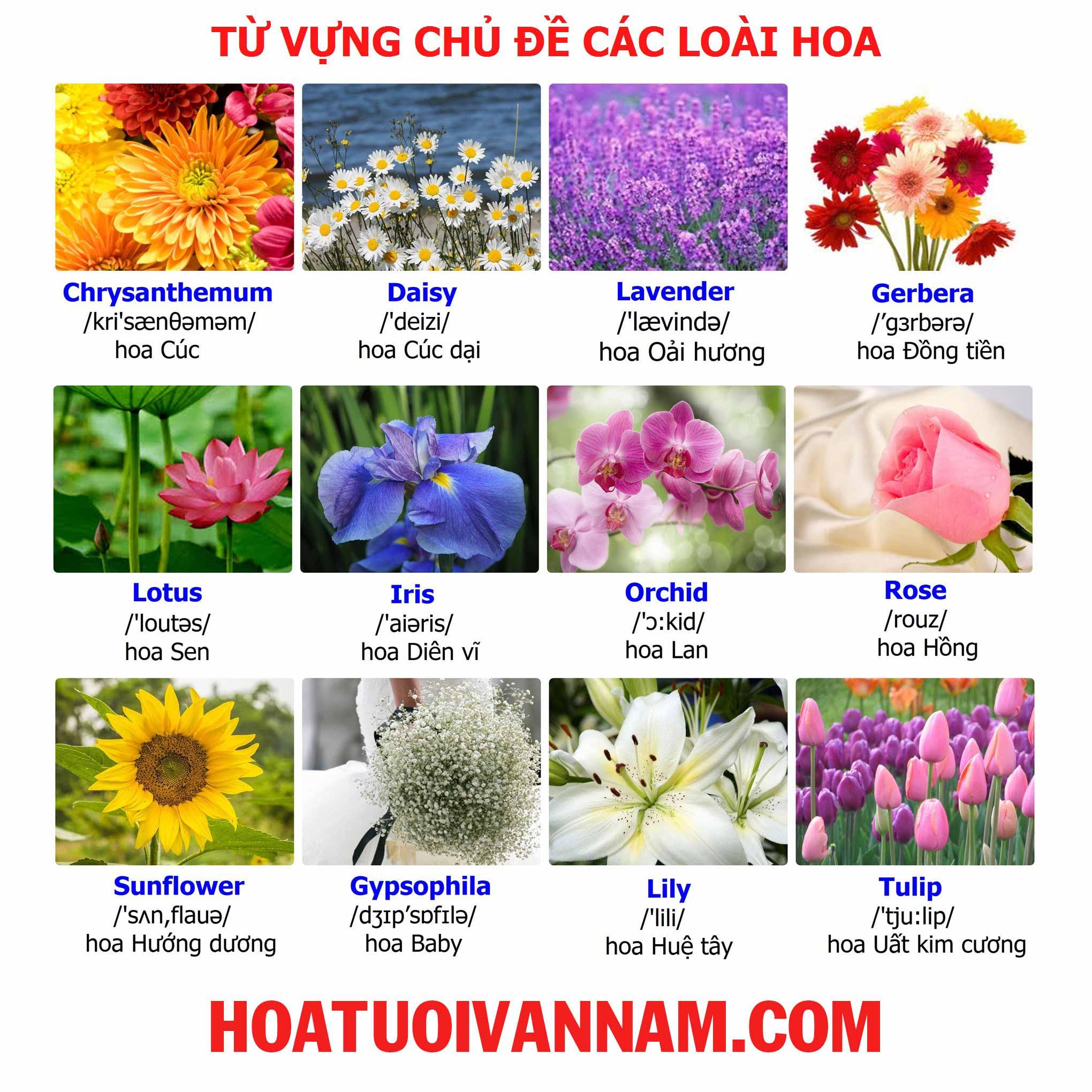 Tên các loài hoa bằng tiếng anh hình 2 a