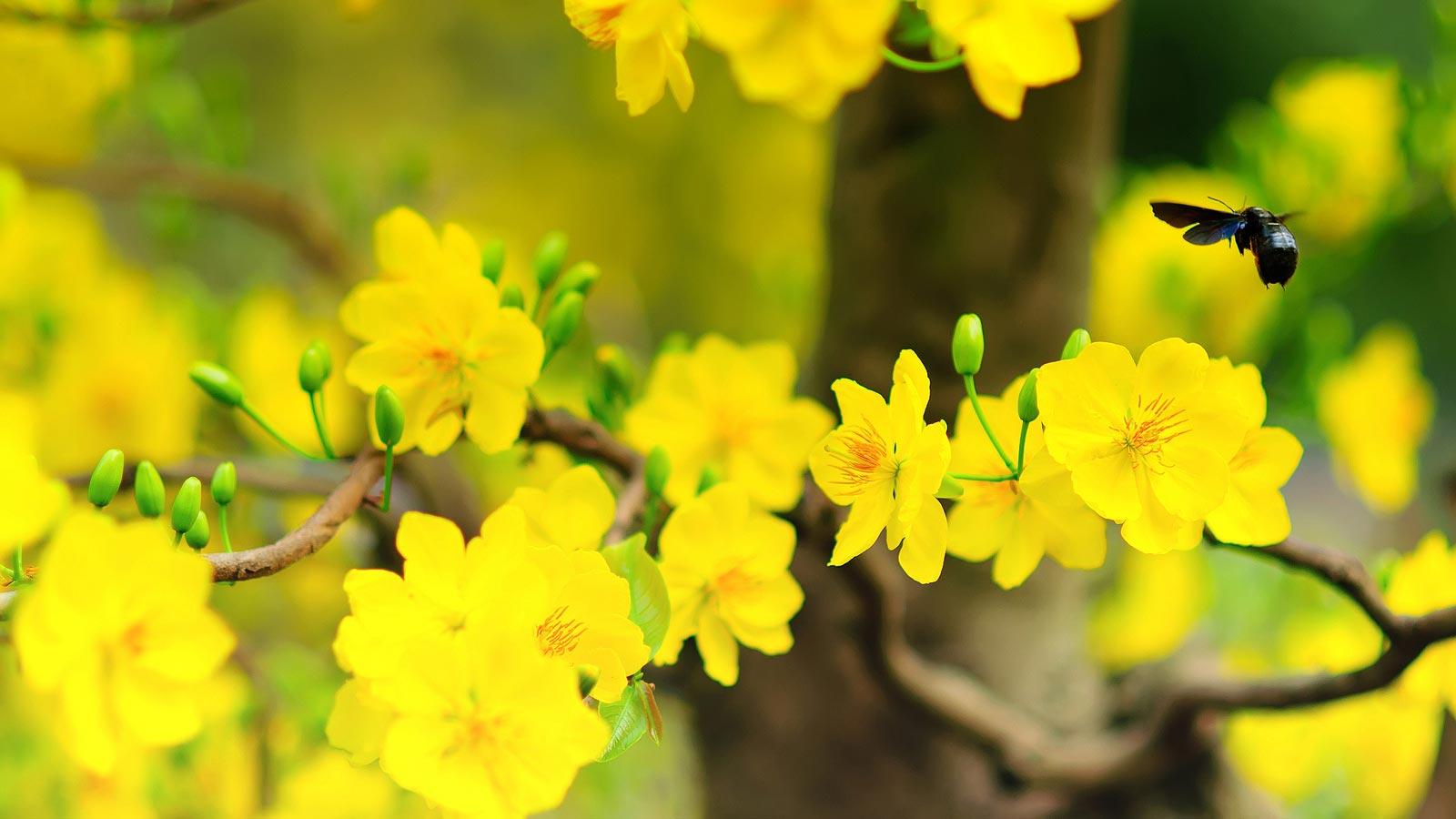 hoa kiểng tết - hoa tươi văn nam 3