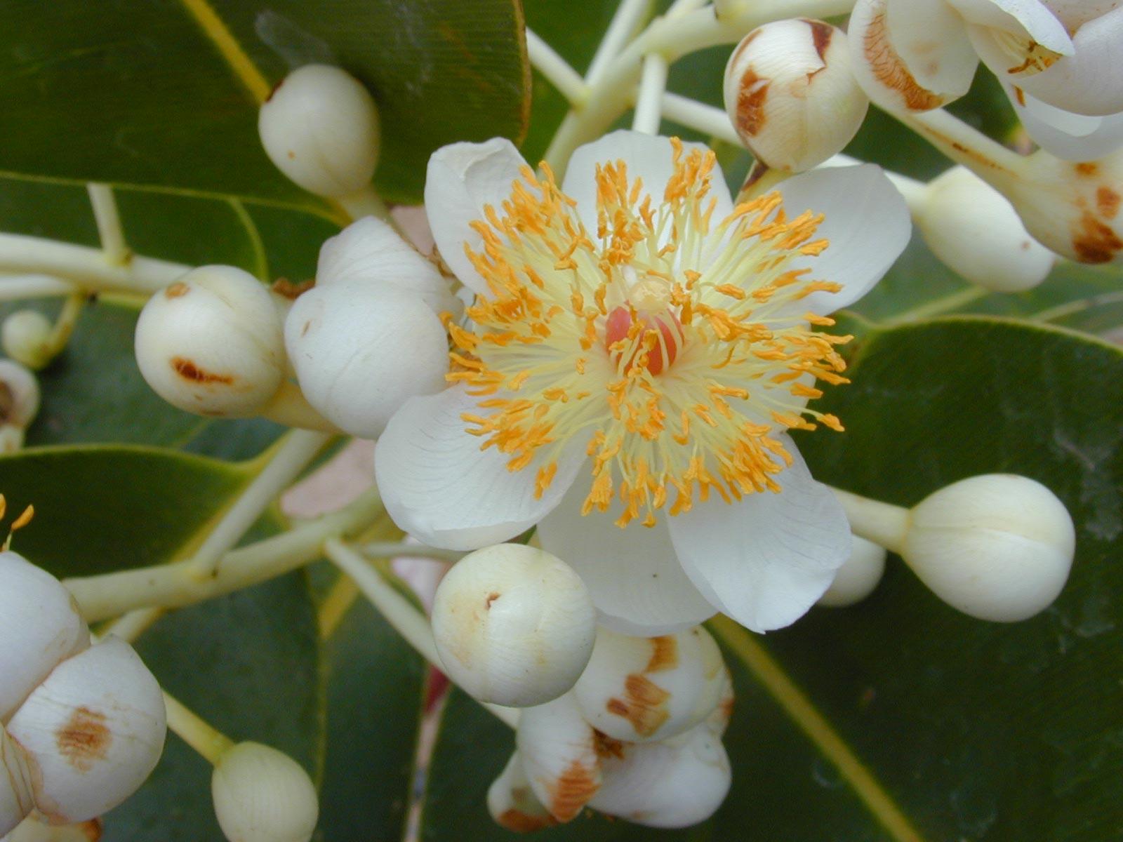 hoa mù u - hoa tươi văn nam 1