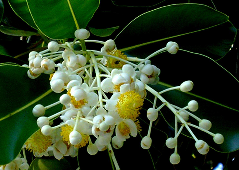 hoa mù u - hoa tươi văn nam 3