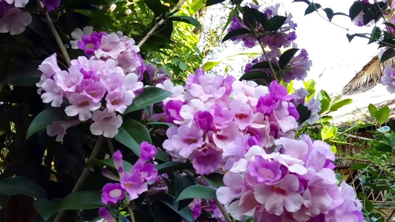 hoa tỏi - hoa tươi văn nam 1