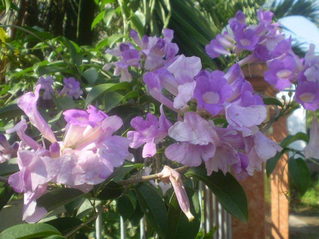 hoa tỏi - hoa tươi văn nam 3
