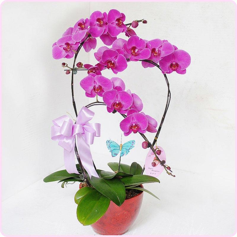 Hoa Tươi Văn Nam đơn vị cung cấp hoa lan hồ điệp uy tín nhất