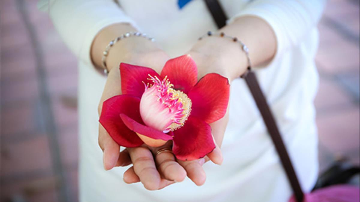 hoa vô ưu - hoa tươi văn nam 4